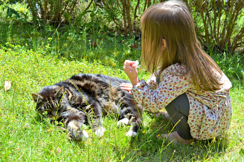 children, cute, pet, cat, animal, happy, parenting