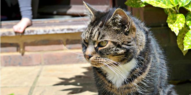 cat, pet, cute, animal, love, summer, beautiful, fur